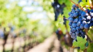Wines and Passiti